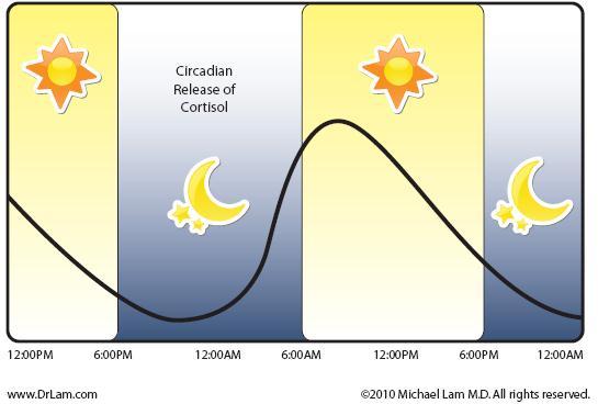 Kortisolniveau igennem døgnet
